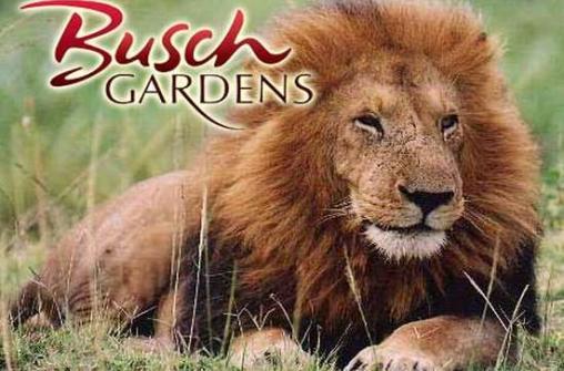 Экскурсия в парк аттракционов и развлечений Busch Gardens