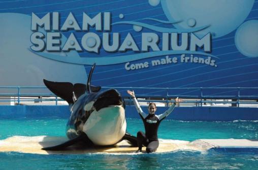Экскурсия в океанариум Miami Seaquarium