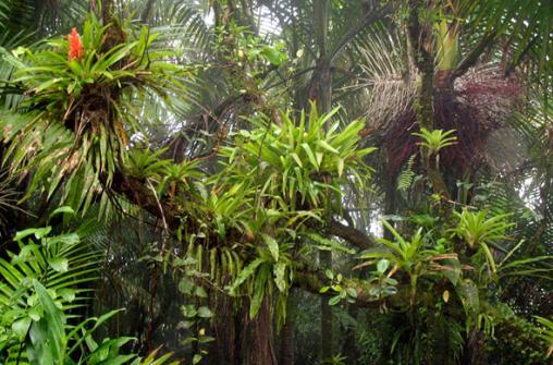 Влажные леса  Эль Юнке и Ботанический сад Геликоний