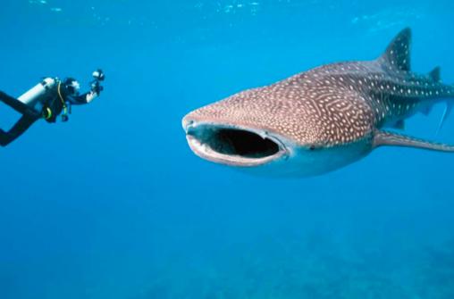 Дайвинг - Карибское море