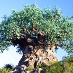 DISNEY'S ANIMAL KINGDOM (Walt Disney World)