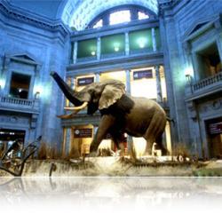 NATIONAL MUSEUM OF NATURAL HISTORY — Национальный музей естественной истории