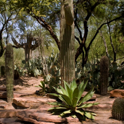 ETHEL M. CHOCOLATES & CACTUS GARDENS