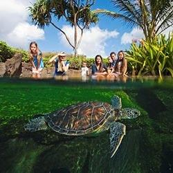 MAUI OCEAN CENTER (Океанологический центр) — о. Мауи