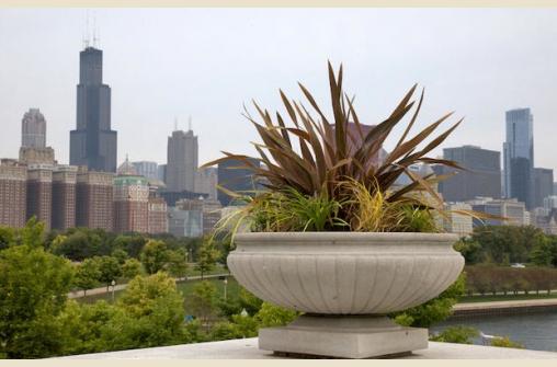Зелёный город Чикаго