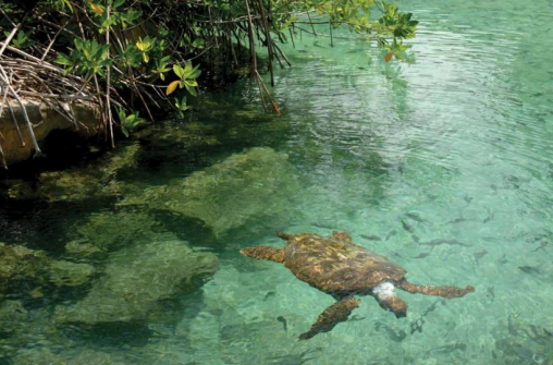 Эко-туризм на островах Карибского моря и курортах Мексики и Коста-Рики
